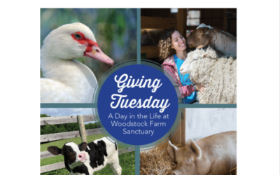 "Spendenaktion ""A Day in the Life at Woodstock Farm Sanctuary"""